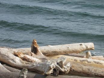 Coastal Affair Photography Diana Serafini serafiniamelia.me