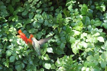 hummingbird serafiniamelia.me photography by Diana Serafini (5)