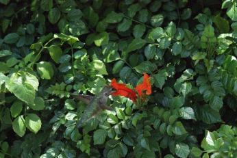 hummingbird serafiniamelia.me photography by Diana Serafini (4)
