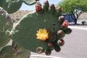 Cacti Southwest photo credit Diana Serafini serafiniamelia.me