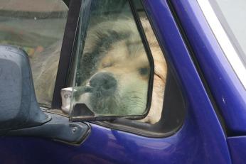 """Dog Days of Summer""photo credit Diana Serafini"