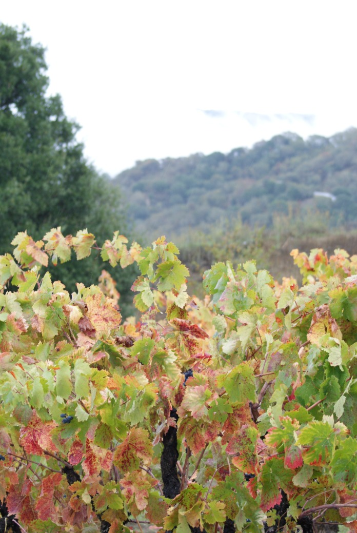 On the vine photography credit Diana Serafini (15)