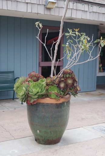 succulent garden container gardening photo by Diana Serafini