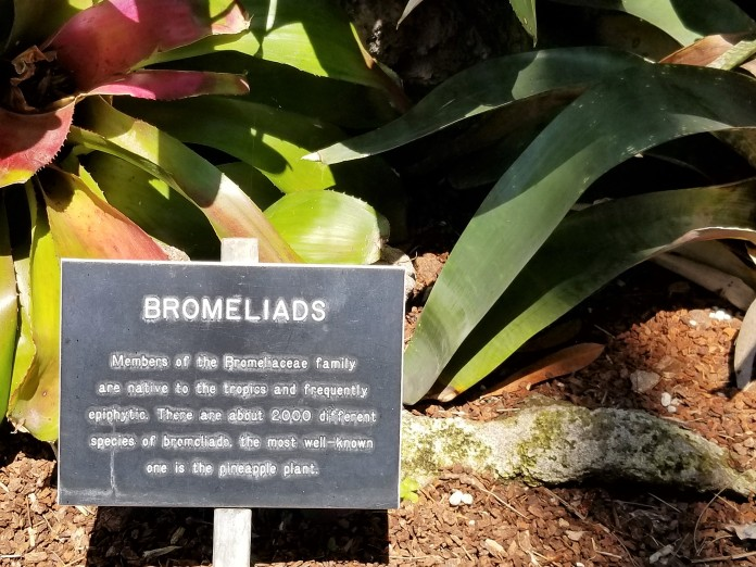 Botanical Garden Balboa Park 2017 photo credit Diana Serafini 7