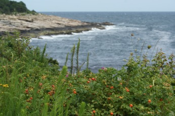 East Coast Coastal Rosehips photography by Diana Serafini
