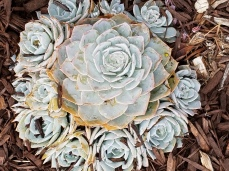 succulents modern styling photo credit Diana Serafini (1)