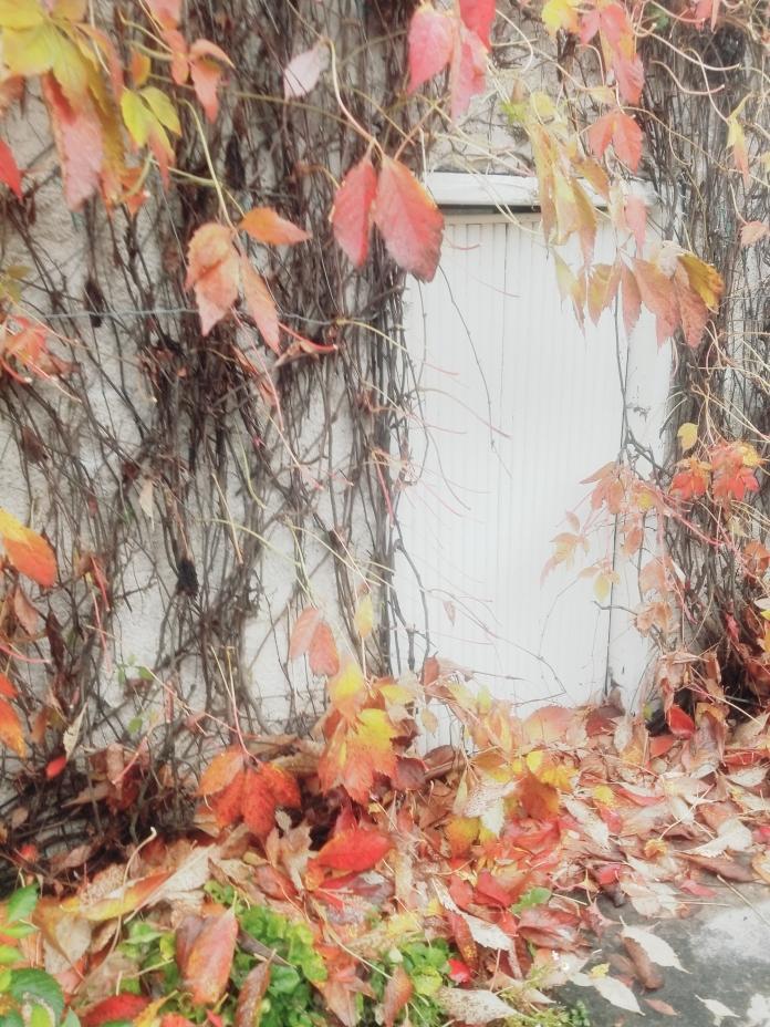 Fall photography Diana Serafini