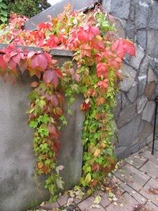 Milles Garden photography by Diana Serafini (1)