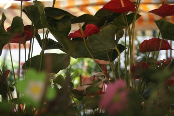 Marche aux Fleurs Cours Saleya Travel ( 4 ) Photography by Diana Serafini
